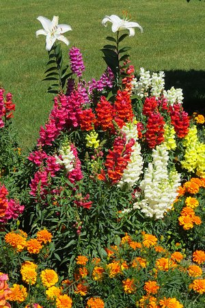 Mount Vernon, WA: Beautiful flowers in the garden