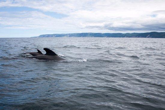 Pleasant Bay, Canadá: Whales!