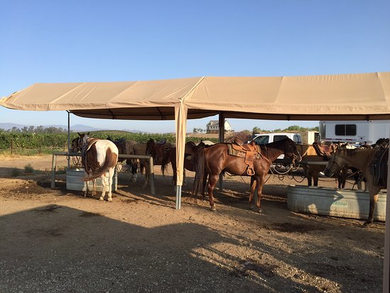 Waiting to ride at Wine Country Trails by Horseback