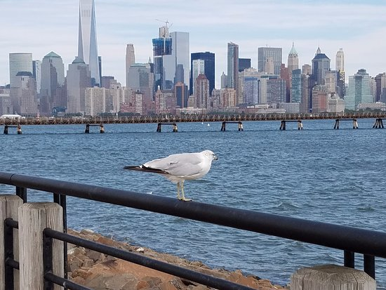 Liberty State Park: This seagull was very photogenic!