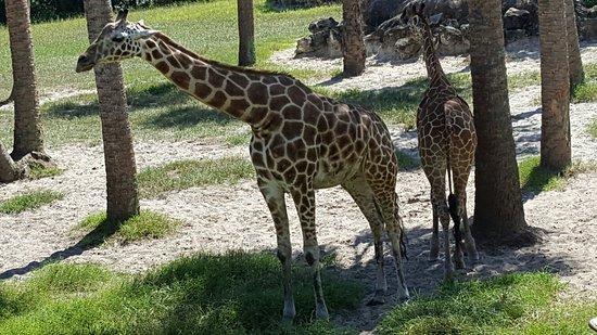 Jacksonville Zoo & Gardens: 20160821_160334_large.jpg