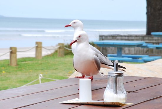 Waihi Beach, Nueva Zelanda: I will have sugar thanks