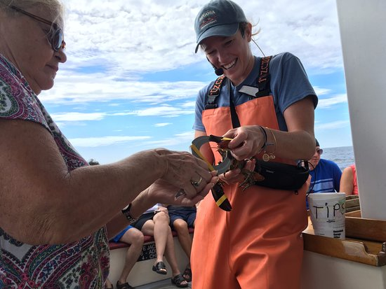 Kennebunkport, ME: Banding a lobster