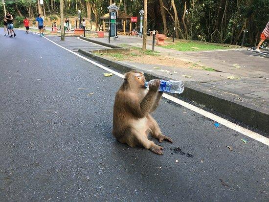 Πουκέτ Τάουν, Ταϊλάνδη: photo0.jpg