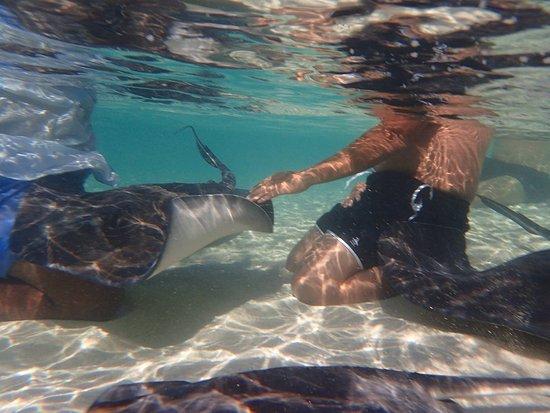 West End, Grand Bahama Island: Amazing experience!