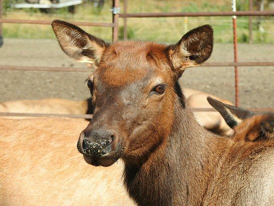 Palmer, AK: Reindeer Farm