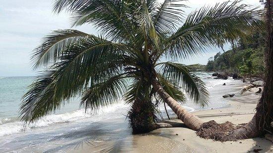 Cahuita, Costa Rica: IMG-20160821-WA0012_large.jpg