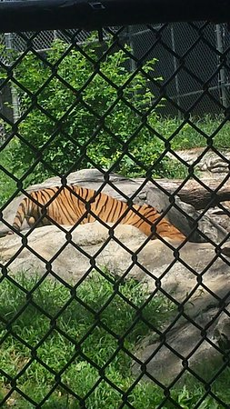 Zoo Knoxville: 20160820_124157_large.jpg