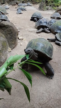 Victoria, Seychelles: feed them tortoise