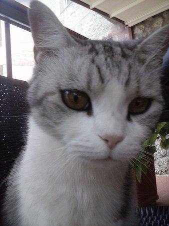 Murlo, İtalya: Grappa il gatto che non scappa