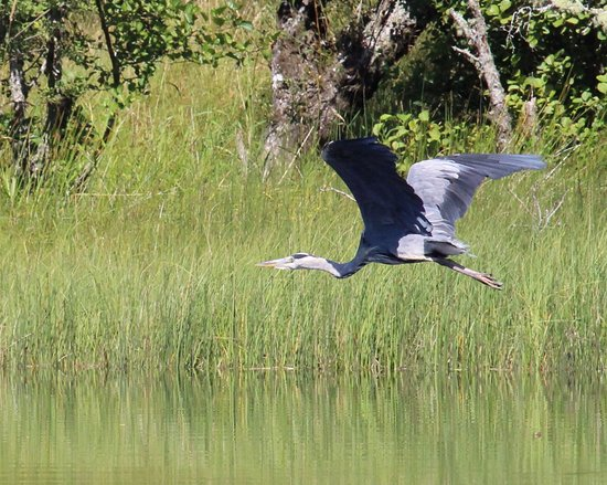 In Your Element Scotland: A heron we saw on our trip
