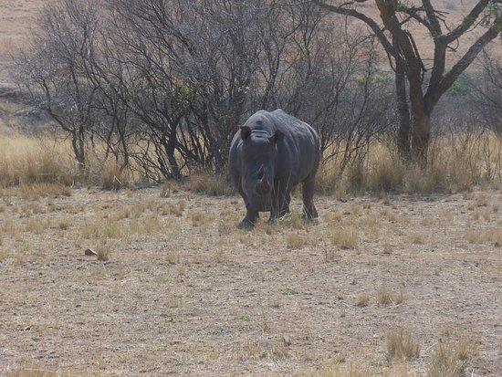 Vryheid, Sydafrika: photo1.jpg