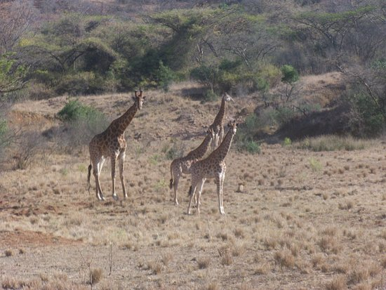 Vryheid, Sydafrika: photo2.jpg