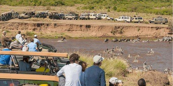 Heritage of African Jungles: Maasai mara migration
