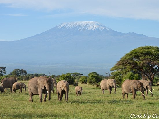 Heritage of African Jungles: Breathtaking view of Mt.Kilimanjaro