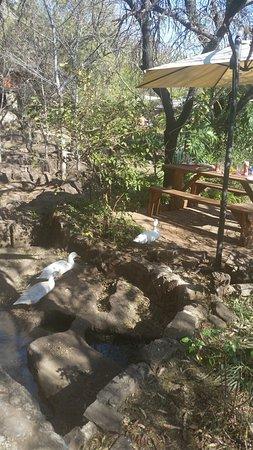 Centurion, جنوب أفريقيا: ducks frolicking about