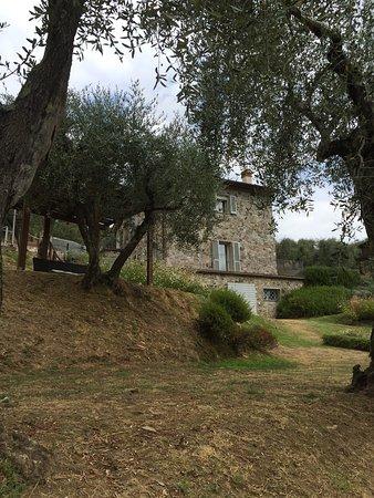 Capannori, Italia: Sesseta villa Tenuta Setteventi
