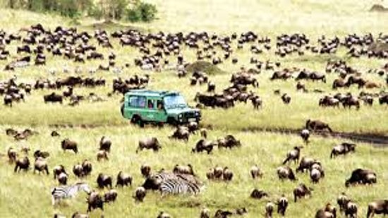 Backpacker Safaris - Day Tours