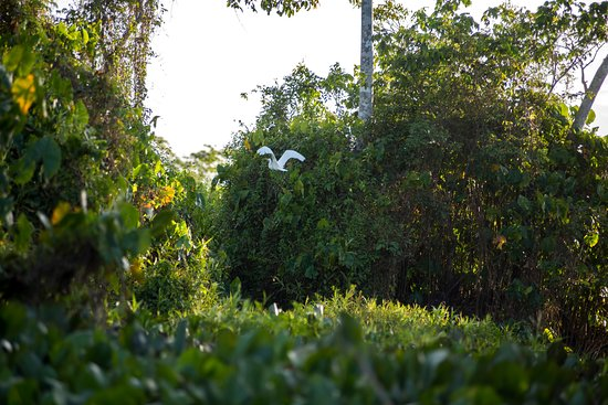 Orinoco Delta, Wenezuela: Stork flying away on the delta