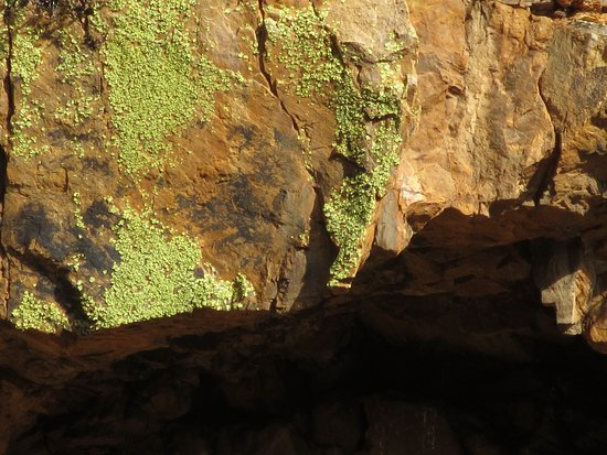 De Rust, Sudáfrica: Fluorescent green lichen colours the rockfaces