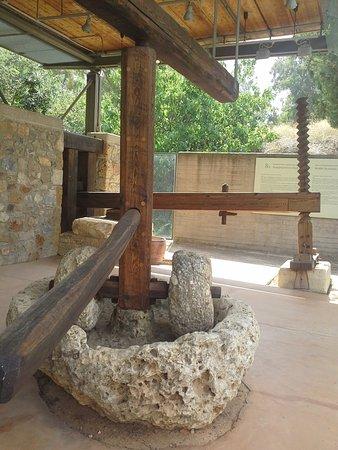 Museo de la Aceituna y del Aceite de Oliva Griego: Olive museum