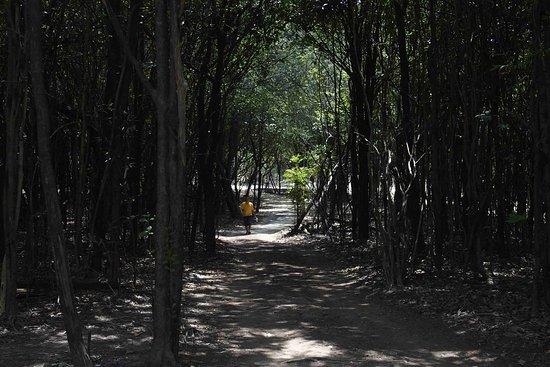 Amazon Ecopark Jungle Lodge: Passeggiata aggiuntiva al trasbordo in piroga