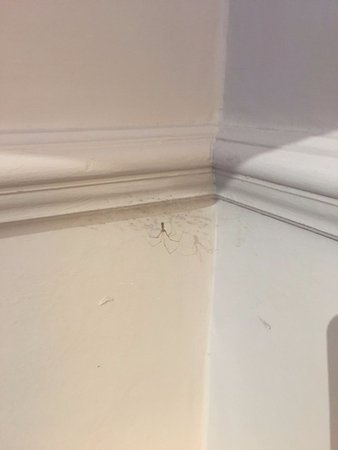 Chesham, UK: Dusty old cobwebs in my so called superior suite