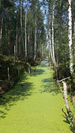 Polessky District, รัสเซีย: Полесский лес