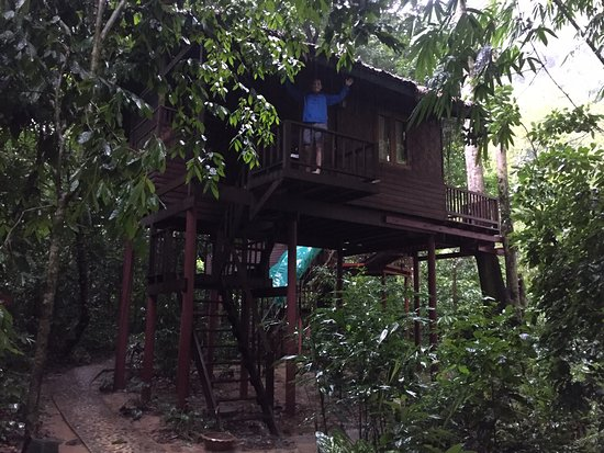 Our Jungle House Photo