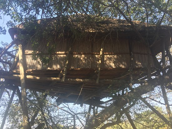 Marc's Treehouse Lodge: one of the real tree houses!! Wish we had stayed here!