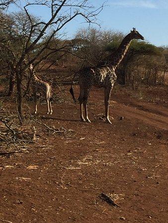 Mkuze, Sydafrika: photo0.jpg