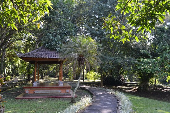 Μενγκούι, Ινδονησία: Jardin à l'arrière