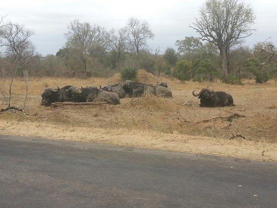 Nelspruit, Republika Południowej Afryki: 20150903_114715_large.jpg