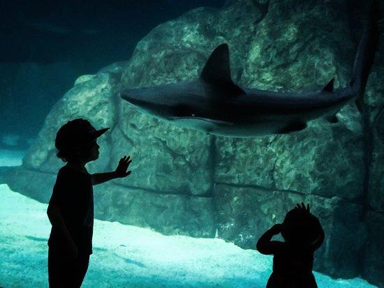 Camden, Nueva Jersey: Tanque com diversos animais, entre eles os tubarões