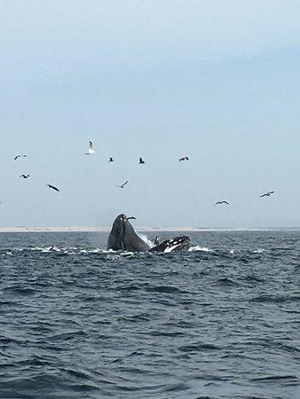 Avila Beach, CA: Whale show!