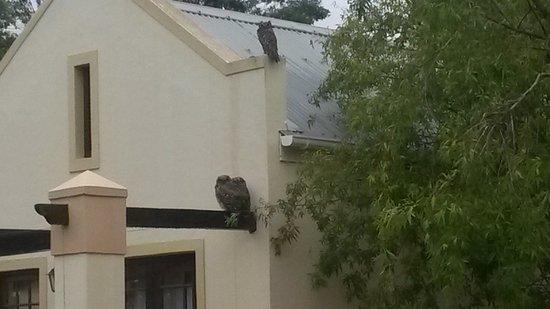 Swellendam, Güney Afrika: Birdlife Langeberg Guest Lodge