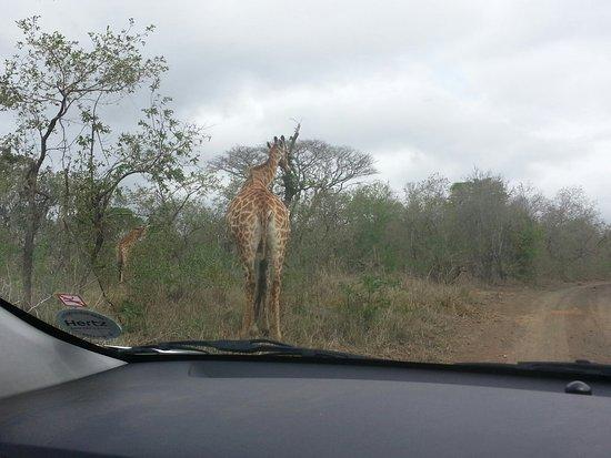 Hluhluwe, Afrika Selatan: 20150909_125944_large.jpg