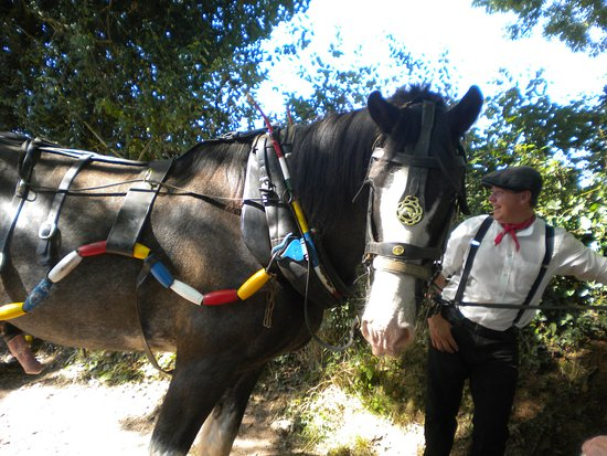 Tiverton, UK: this is Ross our horse