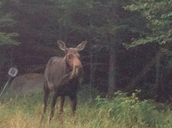 Pittsburg, NH: Moose Alley