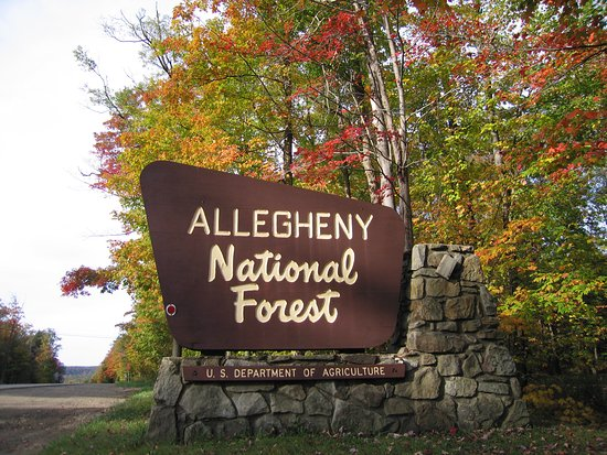 Bradford, Pensilvanya: Allegheny National Forest- Entrance Sign-Fall Foliage