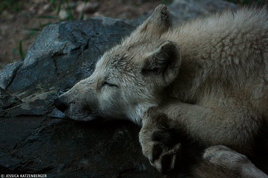 Ely, MN: Grayson taking a snooze on a rock just below one of the viewing windows!