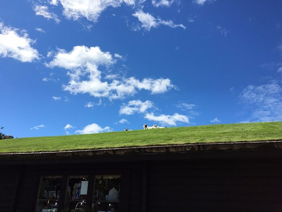 Al Johnson's Swedish Restaurant & Butik: Goats chilling on the restaurant roof