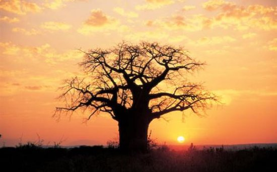 Gallery Tours and Safaris - Private Day Tours: Bantu explorers and Safaris: Sunset view of thr baobab tree