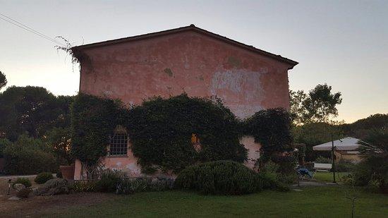 Migliarino, Italia: 20160814_203058_large.jpg