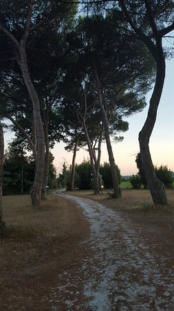Migliarino, Italia: 20160814_203008_large.jpg