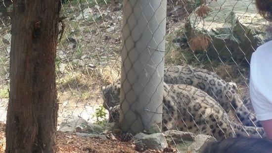 Stoneham, MA: Leopards