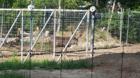 Stoneham, MA: Reindeer