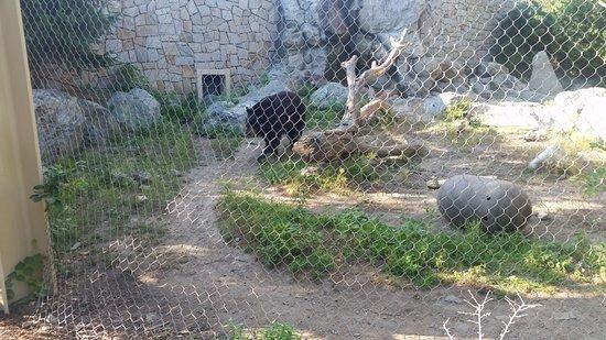 Stoneham, MA: Black bear