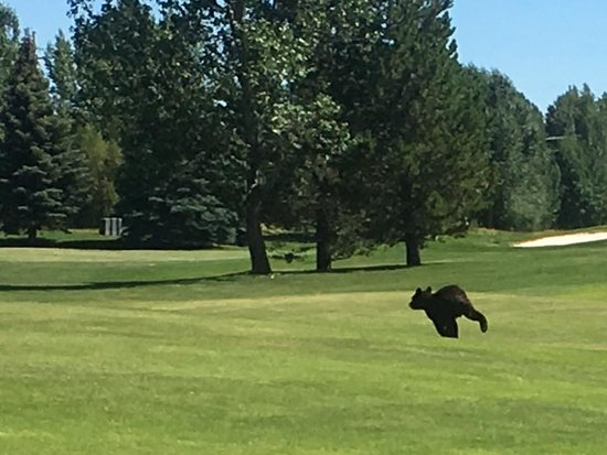 Teton Pines Country Club: Bear Cub July 24