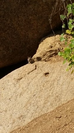 Manitou Springs, CO: This little guy was encouraging us up